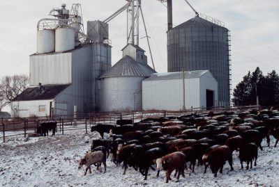 Photo: Cattle in sub-freezing weather at a feedlot near Springfield, Nebraska.
