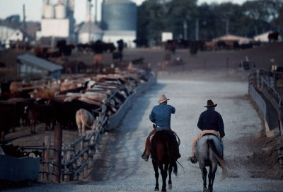 Photo: Jack Schreier and Scott Kramer check cattle on a winter day at a feedlot near Springfield, Nebraska.