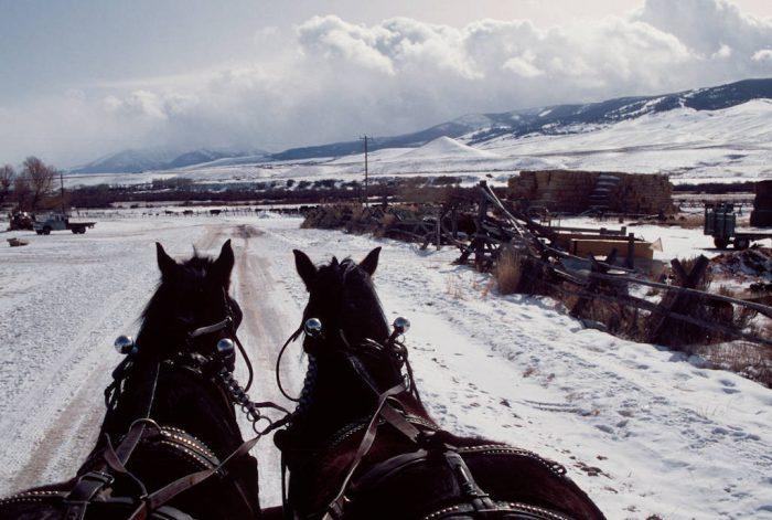 Photo: Dan Shiner uses draft horses to feed hay to his livestock at the Shiner Ranch near Leadore, Idaho.