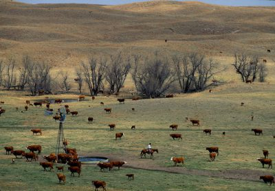 Photo: Cattle roundup in the Nebraska Sandhills.