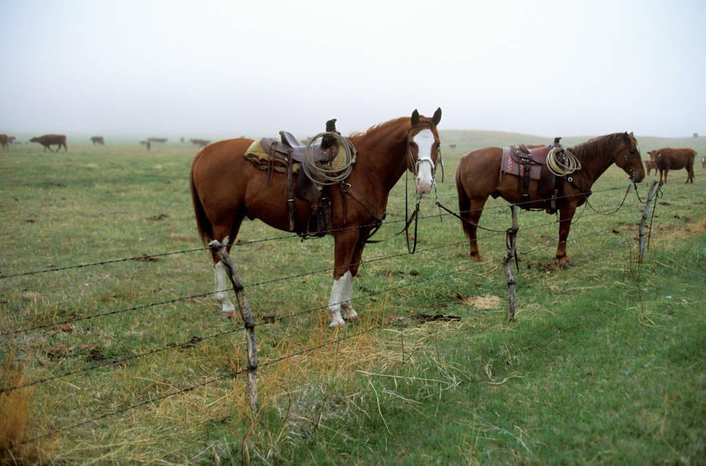 Photo: Scene from a ranch in Nebraska's Sandhills.