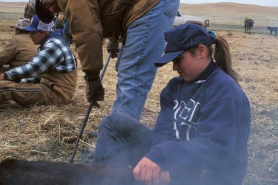 Photo: Teenagers help with branding cattle at a ranch in the Nebraska Sandhills.