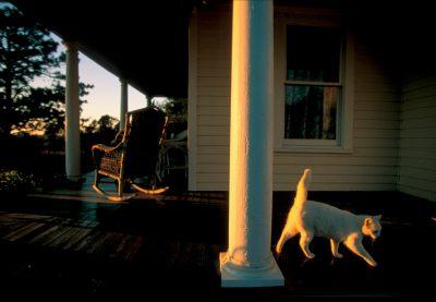 Photo: Cat on the porch at Waveland Farm near Bennet, NE.