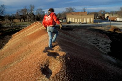 Photo: Larry Seaman walks atop a two-story high pile of milo to inspect it in Hubbell, Nebraska.