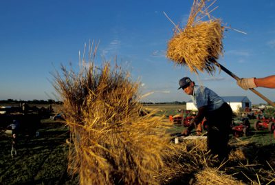 Photo: Wheat threshing Days in Goessel, Kansas.