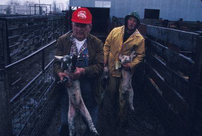 Photo: Yard workers Wayne Schatz (right) and Adrian Girard (left) hold lambs outside Shasta Livestock Auction building in Cottonwood, California.