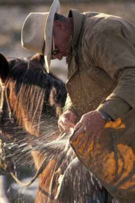 Photo: A cowboy washes mud off his jacket at the Shasta Livestock Auction in Cottonwood, California.