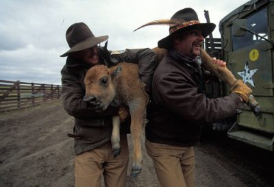 Photo: Two ranchers carry a young calf.