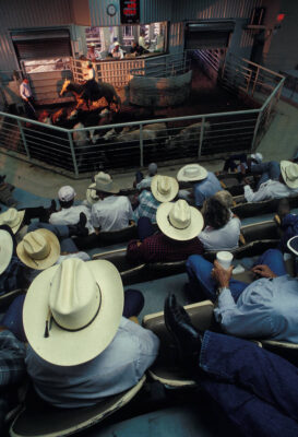 Photo: Men sit at a livestock auction in Amarillo, Texas.