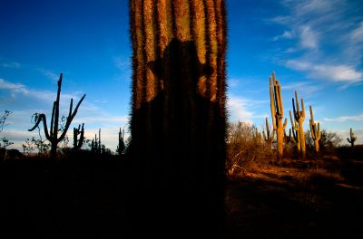 Photo: A visitor casts a shadow on a saguaro cactus in Cabeza Prieta National Wildlife Refuge, one of the largest and unspoiled refuges in the United States.