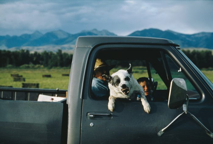 Photo: A rancher's dog expresses displeasure by snarling at photographer, Joel Sartore, on a ranch in Idaho.