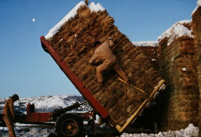 Photo: Ranch hands pack bales of hay for winter in Modac County, California.