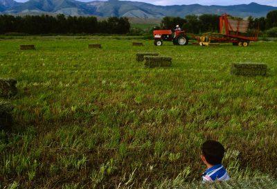Photo: A boy watches his grandfather cut hay in an Idaho field.