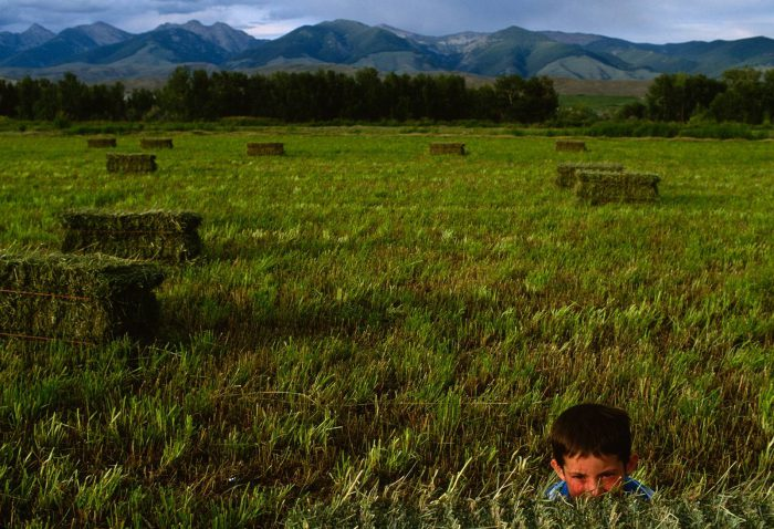 Photo: A boy watches hides in an Idaho field.