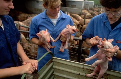Photo: A woman and her daughters work with piglets, Bennet, Nebraska.