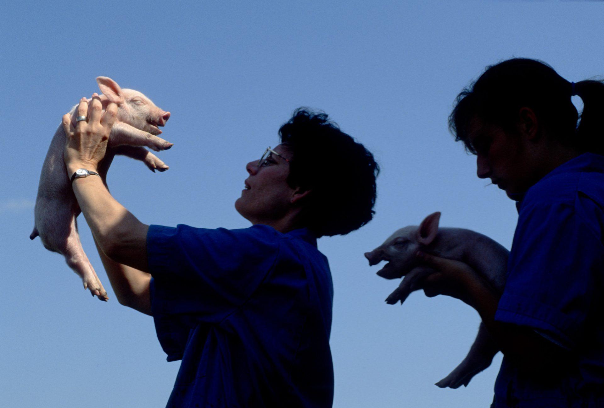 Photo: A woman holds up a piglet, Bennet, Nebraska.