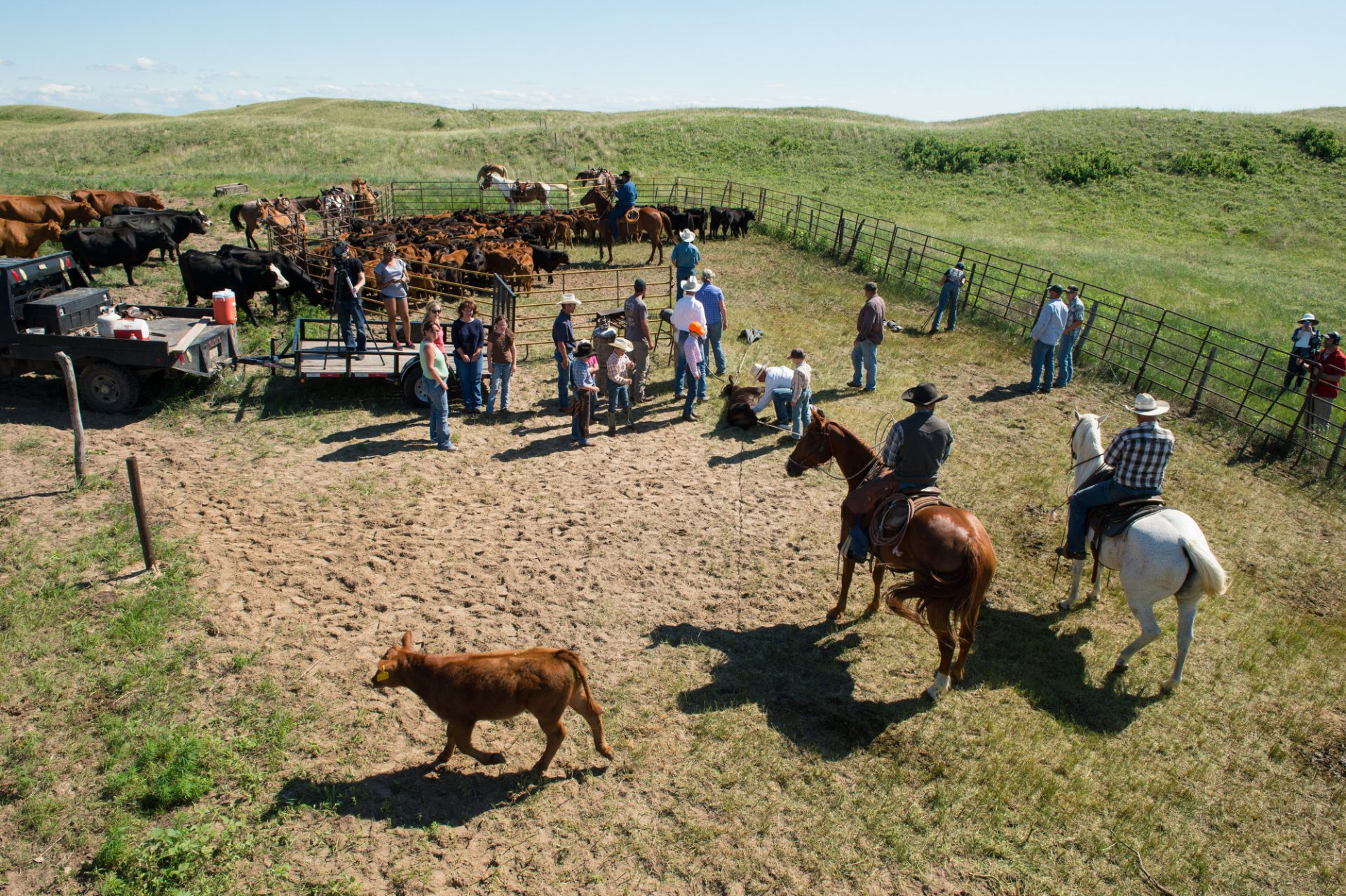 Photo: Ranchers working with cattle.
