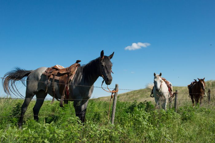 Photo: Three horses stand along a fence in a field.