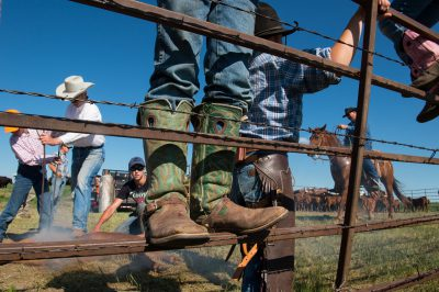 Photo: Elementary age boys and girl sit on a fence during cattle branding.