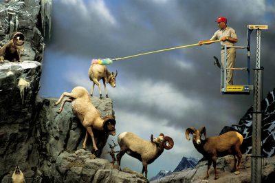 SHEEP DUSTING