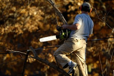 Photo: A man saws trees in Lincoln, Nebraska.