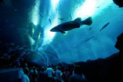 Photo: People explore the Georgia Aquarium in Atlanta.