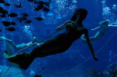 Photo: Theatrical mermaids use oxygen tubes to breathe underwater while performing at Weeki Wachee Springs State Park in Weeki Wachee, Florida.