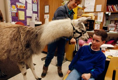 Photo: A young boy dodges a nuzzle from a llama visiting his school in Palo Cedro, California.