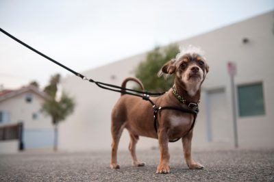 Photo: A dog named Huey, in Los Angeles, California.
