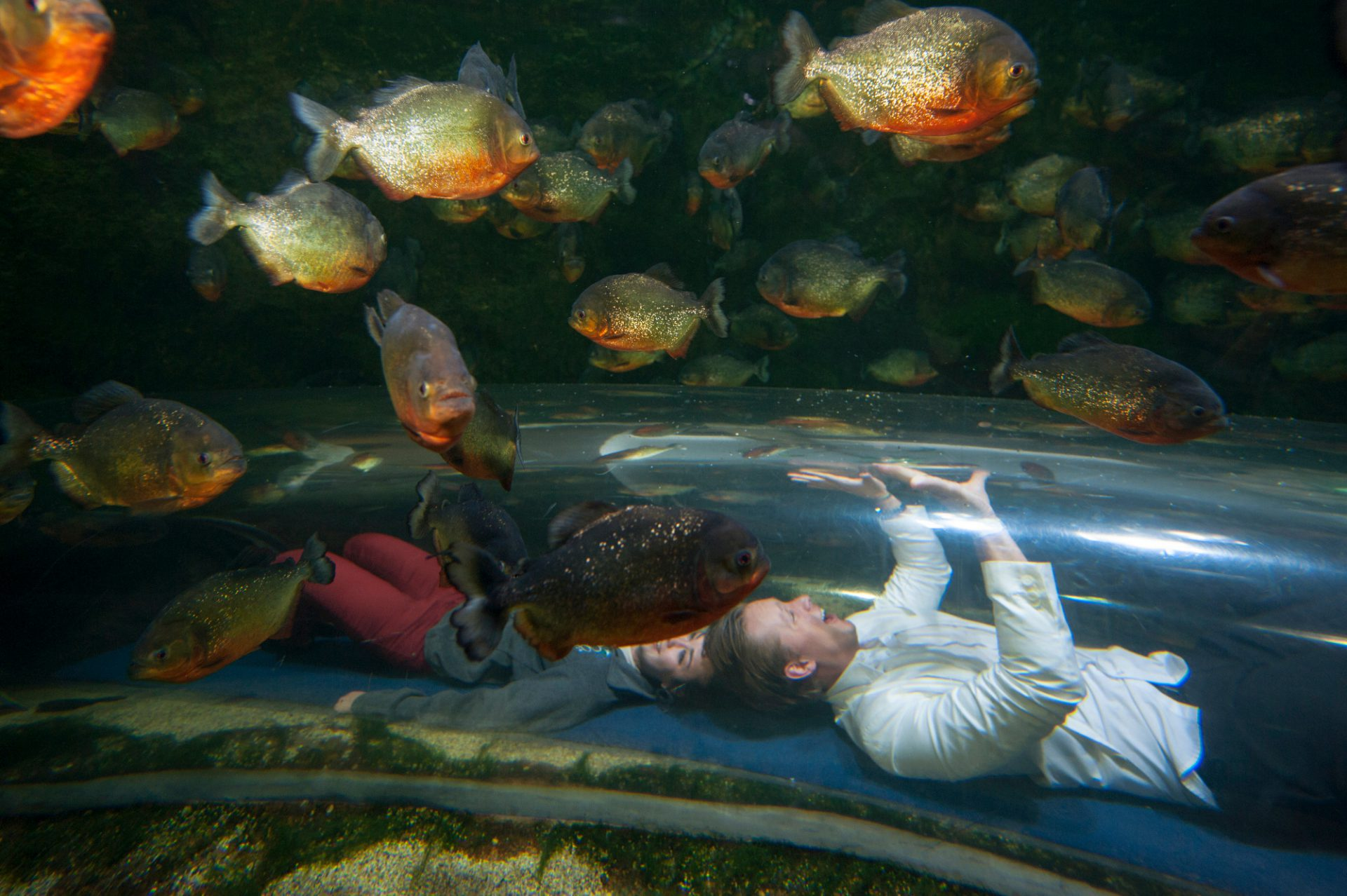 Photo: Tourists crawl through a tunnel at the red bellied piranha tank in the Houston Zoo.