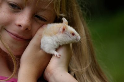 Photo: A young girl holds her pet hamster.