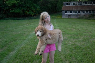 Photo: A little girl holds her goldendoodle puppy.