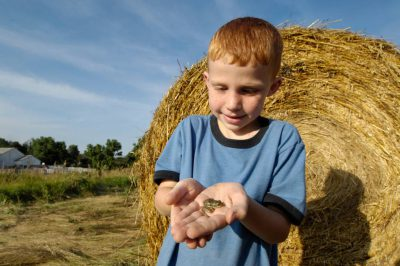 A young boy looks at a plains leopard frog (Lithobates (Rana) blairi) in front of a haybale in Greenleaf, Kansas.