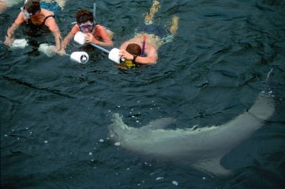 Photo: Tourists swim with dolphins in Florida's middle Keys.