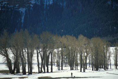 Photo: Hiker in Yellowstone National Park.