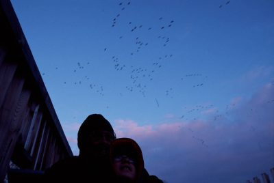Photo: Wildlife watching (snow geese) at DeSoto NWR, Iowa.