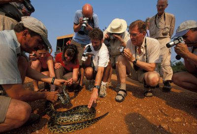 Photo: Tourists photograph a snake (unkown species) in Brazil's Pantanal region.