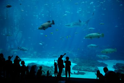 Photo: People view many different kinds of fish at the Georgia Aquarium.