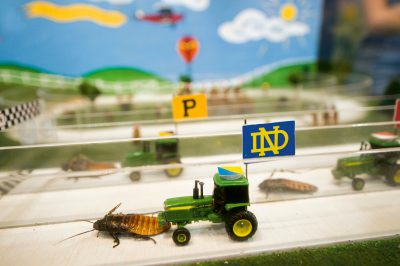 Photo: Madagascar hissing roaches pull tiny tractors at the Indiana state fair.