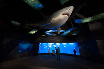 Photo: A life-sized great white shark looms overhead at the Suzanne and Walter Scott Aquarium at Omaha's Henry Doorly Zoo.
