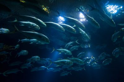 Photo: The Scott Aquarium at Omaha's Henry Doorly Zoo.