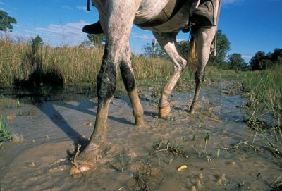 Photo: A horse's hooves dig into the mud in Brazil's Pantanal region.