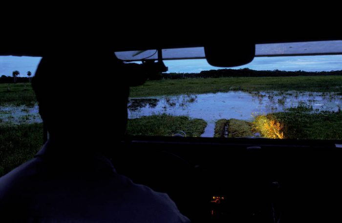Photo: A driver looks out over the Brazilian Pantanal.