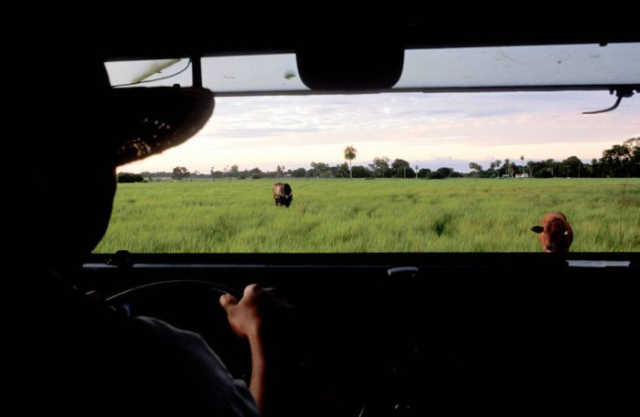 Photo: A driver looks out over a ranch in the Brazilian Pantanal.