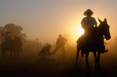 Photo: Pantanieros (cowboys) herd cattle during the dry season at Caiman Ranch in Brazil's Pantanal.