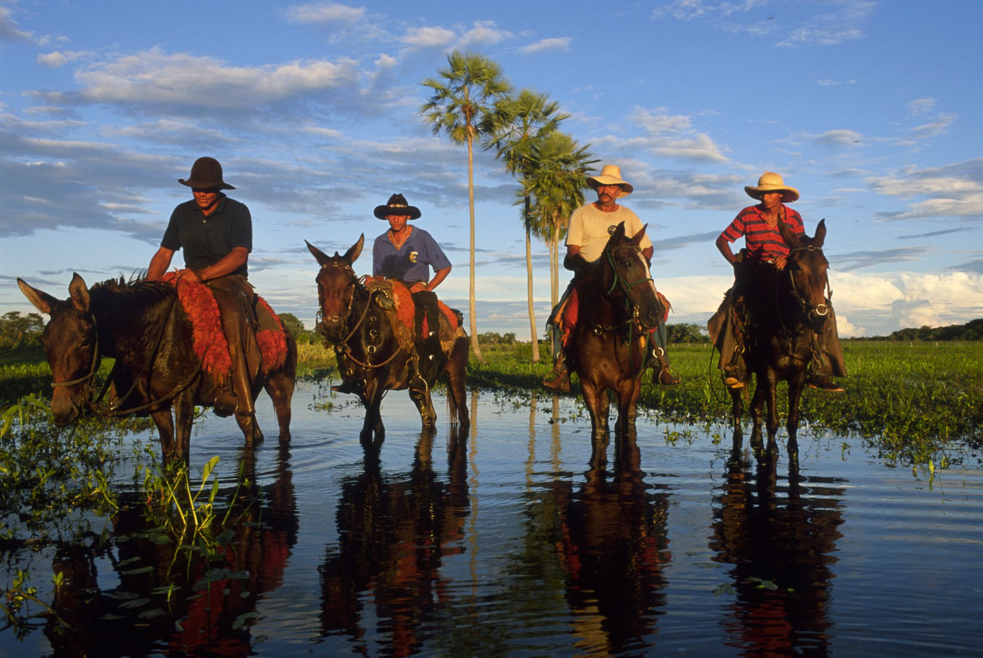 Photo: Pantanieros (cowboys) on horseback during the wet season at Caiman Ranch in Brazil's Pantanal.