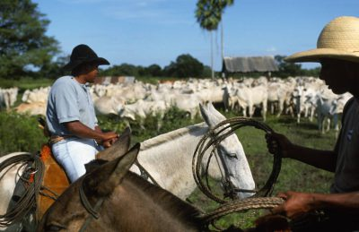 Photo: Pantanieros (cowboys) herd cattle at Caiman Ranch in Brazil's Pantanal region.