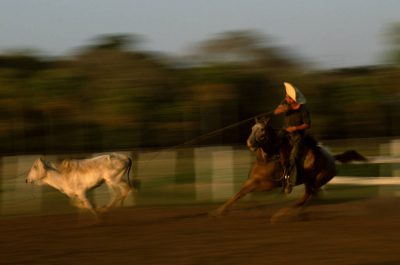 Photo: A pantaniero (cowboy) ropes cattle on horseback at Caiman Ranch in Brazil's Pantanal region.
