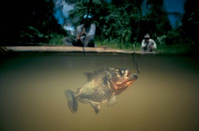 Photo: Piranha fishing in the Tuichi River in Bolivia's Madidi National Park.