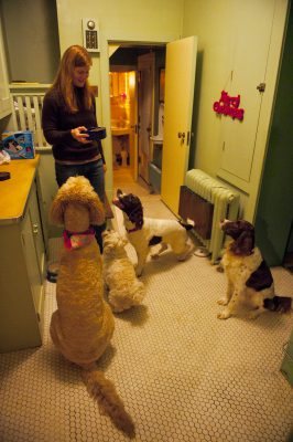 Photo: Four dogs wait for their dinner in Lincoln, Nebraska.